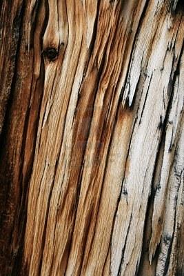 splintered-wood-of-the-cross