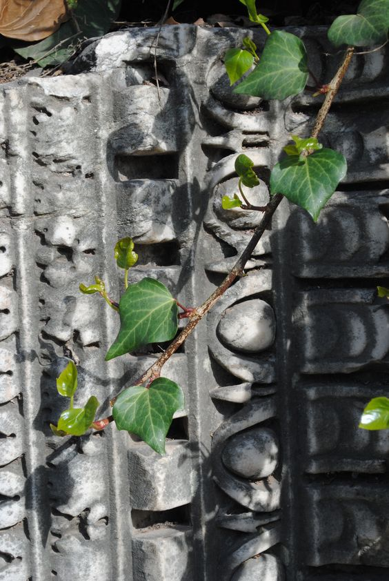 anicent with leaf.jpg